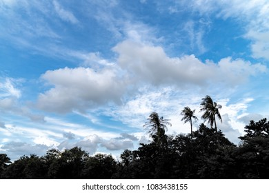 Coconut trees and big trees lined up. In the dark The back ground is a beautiful sky with large clouds.