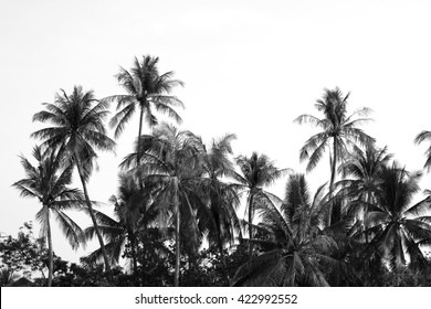 coconut trees with black and white tone