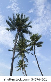 Coconut trees with blue sky background