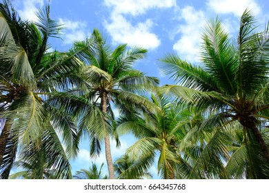 Coconut trees with blue sky and cloud background on the beach  travel holiday fresh