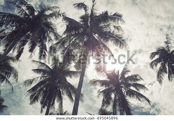 Coconut trees and the blue sky under the sun vintage style.