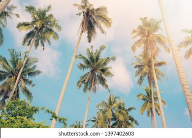 Coconut trees by the sea on holidays.