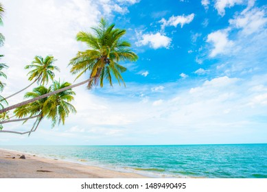 Coconut trees by the sea in summer. The beaches in Thailand are a European vacation.Coconut tree leaning into the sea. Beaches and coconut trees in Thailand.blue sky and white clouds.