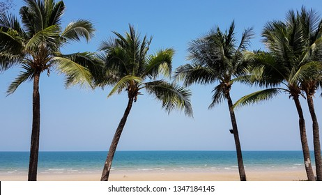 coconut trees  in front of the beach and sea view with clear blue sky