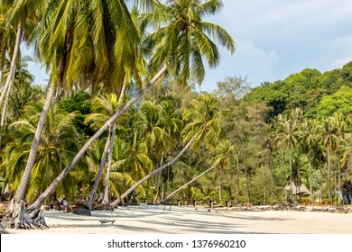 Coconut trees lined the beach at Koh Kood in Trat province of Thailand.