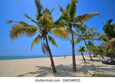 Coconut trees lined up on the white sands of marari sea beach.
