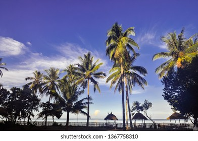 Coconut Trees on a Tropical Beach Resort - Donsol, Sorsogon, Philippines