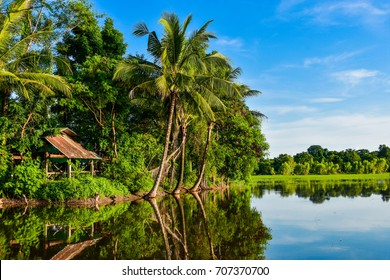 Coconut trees and shade reflected on the water surface in the junction area. With flood Southeast Asia, Vietnam, Indonesia, Myanmar, Thailand, Cambodia, Philippines