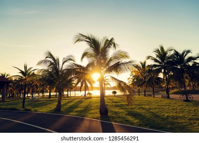 coconut trees and shardow with sunset