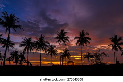 Coconut trees in silhouette