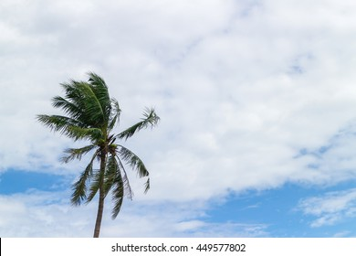 Coconut trees, sky, clouds and wind.