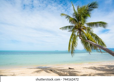 Coconut trees stretch into the sea