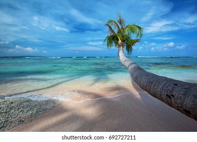 A coconut trees stretches out over the warm sandy beach of Tanguisson Beach on the tropical island of Guam with blue skies and turquoise waters