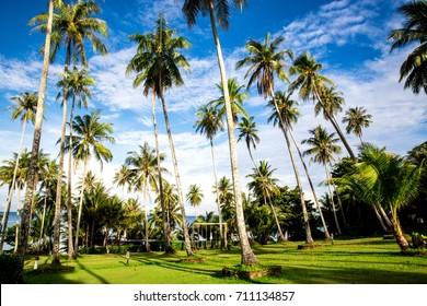Coconut trees with sunrise at Koh kood island, Trat, Thailand
