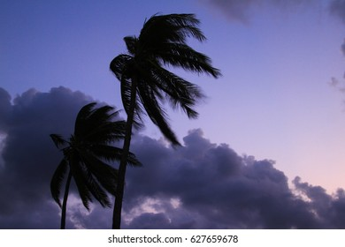 Coconut trees at sunset.