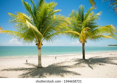 Coconut trees and turquoise sea at Sossego beach on Itamaraca island - Pernambuco, Brazil