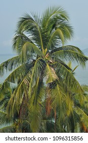 Coconut trss beside The beach have blussky background