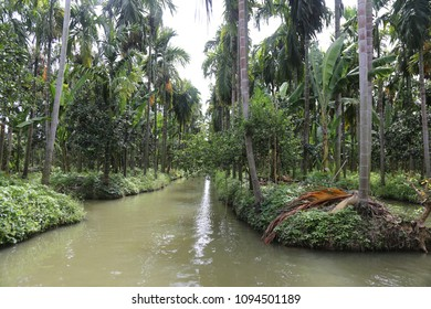 coconut and vegetables farm with flood way