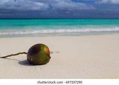 Coconut in Zanzibar