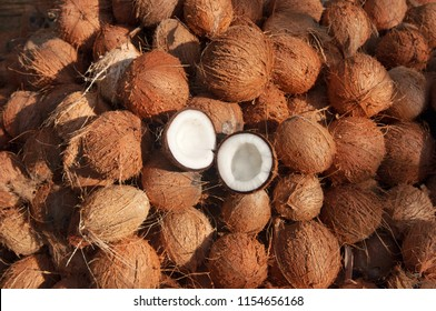 Coconuts cut in half and whole coconuts. A lot or heap of fresh tasty coco in Kerala India dried in sun to make oil from copra. member of the family Arecaceae palm family). charcoal and coir. drupe