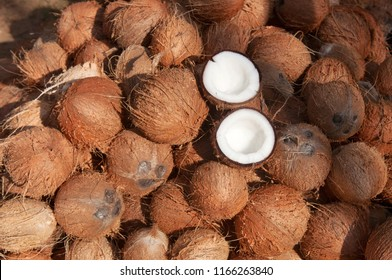 Coconuts cut in half and whole coconuts. A lot or heap of fresh tasty coco in Kerala India dried in sun to make oil from copra. member of the family Arecaceae palm family.  charcoal and coir.  drupe