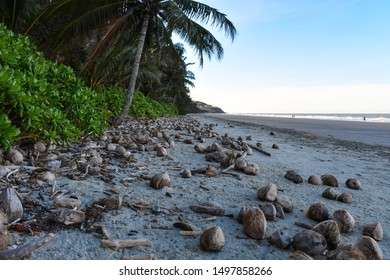 Coconuts on the Beach of Port Douglas