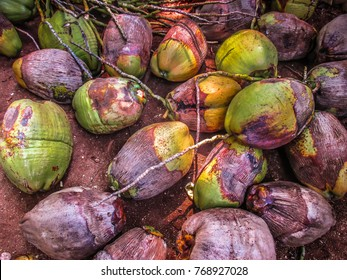 coconuts on the floor in India