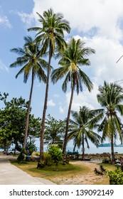 Coconut/Three coconut trees sky background.