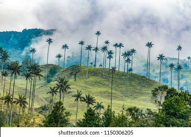 Cocora valley in Andes mountain, Colombia