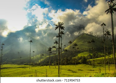 Cocora valley in Colombia - the place with the tallest palm trees in the world