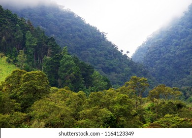Cocora valley in Cordiliera Central, Salento, Colombia, South America