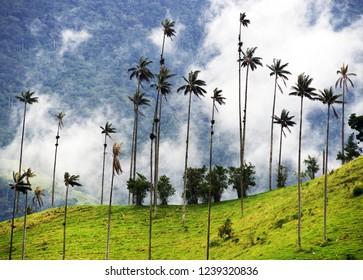 Cocora valley in Cordiliera Central, Salento, Colombia, South America