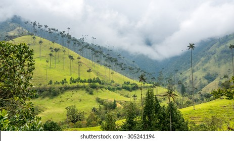 Cocora Valley, with majestic wax palm, Colombia