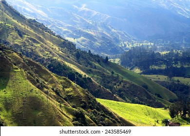 Cocora valley national park