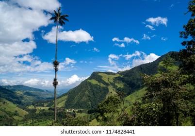 Cocora Valley  near Salento Colombia