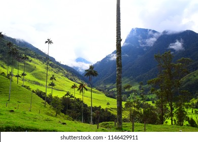 Cocora Valley Salento Colombia