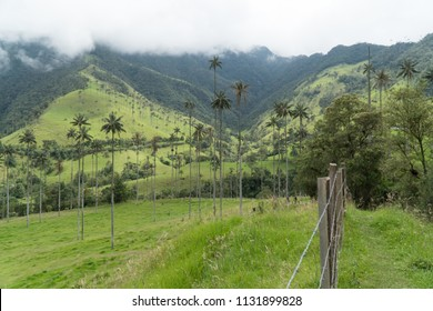 The Cocora Valley in Salento, Colombia is a beautiful, unique, must see destination. The tall palm trees in the grassy valley vaguely reminds me of the Truffala trees from Dr. Seuss' the Lorax.