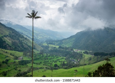 The Cocora Valley in Salento, Colombia. It is home to the national tree of Colombia, the tall wax palms. The background are green rolling hills covered partly in the fog. The scene is very soothing.
