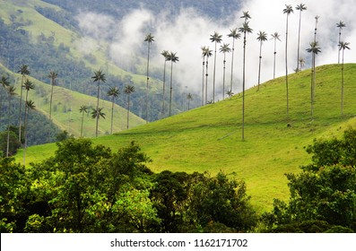 Cocora valley, Salento, Colombia, South America
