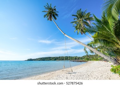 Cocunut and beach or palm tree in good weather