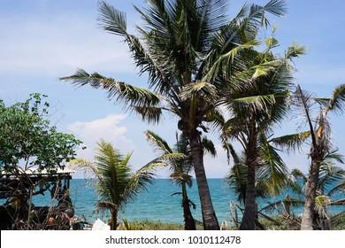 Cocunut Tree at beach