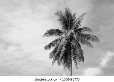 Cocunut Tree Black And White