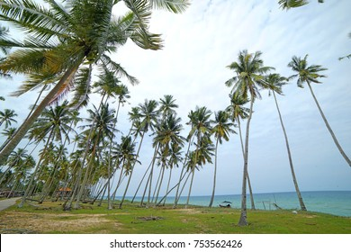 Cocunut tree by the sea at terengganu