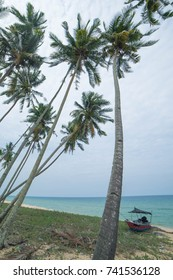 Cocunut tree at the sea side