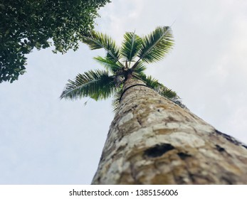 Cocunut tree under the photography..