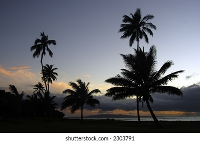 Cocunut Trees along the beach coast of Hawaii during sunset