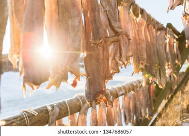 Cod on drying rack to produce stockfish, near the harbor in the town of Svolvaer, island Austvagoya. The Lofoten islands in northern Norway during winter. Scandinavia, Norway