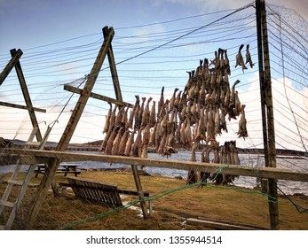 Cod stockfish hanging on flakes. Drying flake - 'hjell' in Norway. Stockfish is unsalted fish, especially cod, dried by cold air and wind on wooden racks.