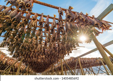 Cod stockfish hanging on traditional wooden rack against the sun for drying fish industry, Lofoten archipelago islands, Nordland county, Norway.