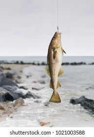 codfish on fishing-rod on background of sea